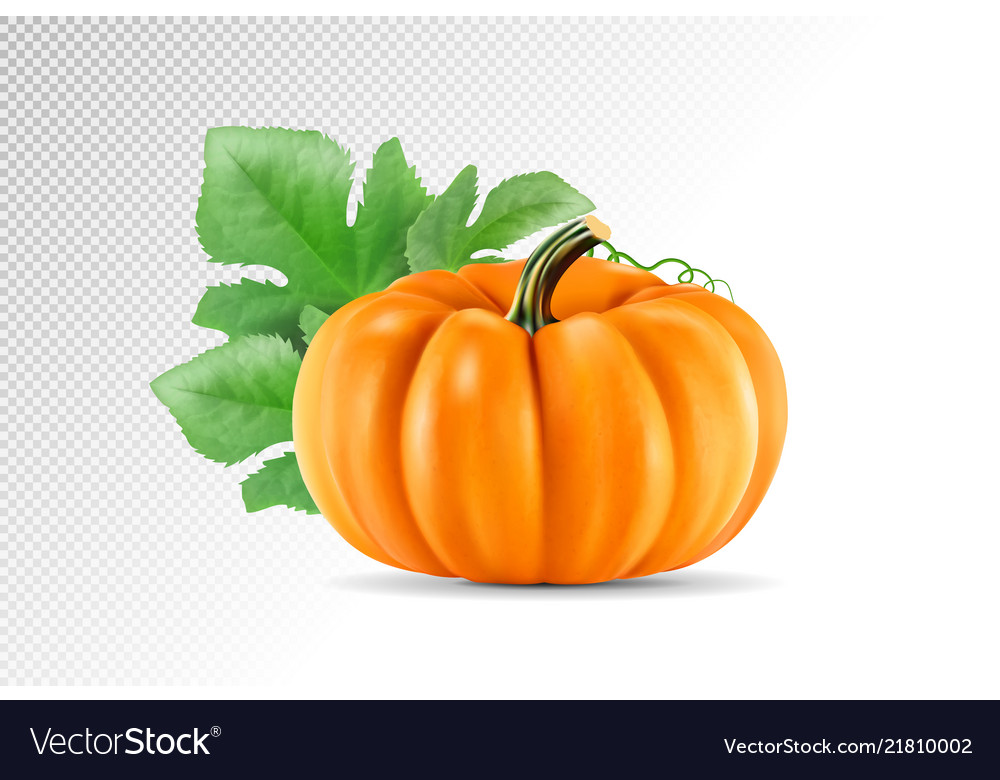 Realistic pumpkin isolated on transparency