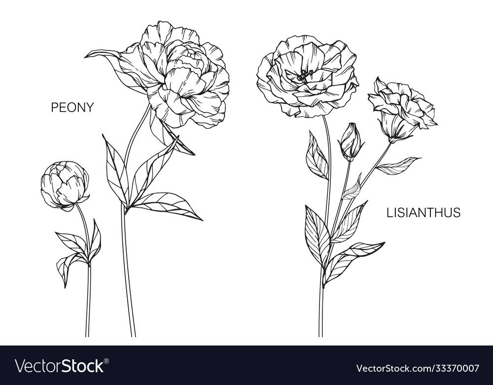 Set peony lisianthus flower and leaf hand