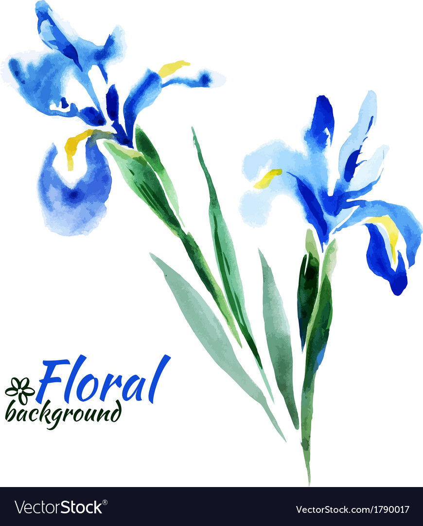 Beautiful watercolor paint blue irises