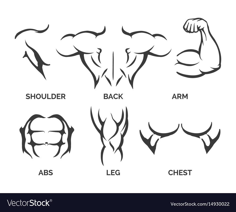 Bodybuilder body parts icons vector image