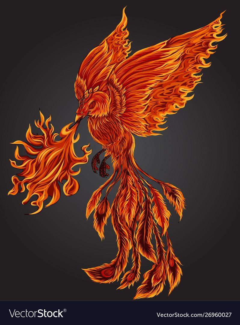 Phoenix fire bird Royalty Free Vector Image - VectorStock