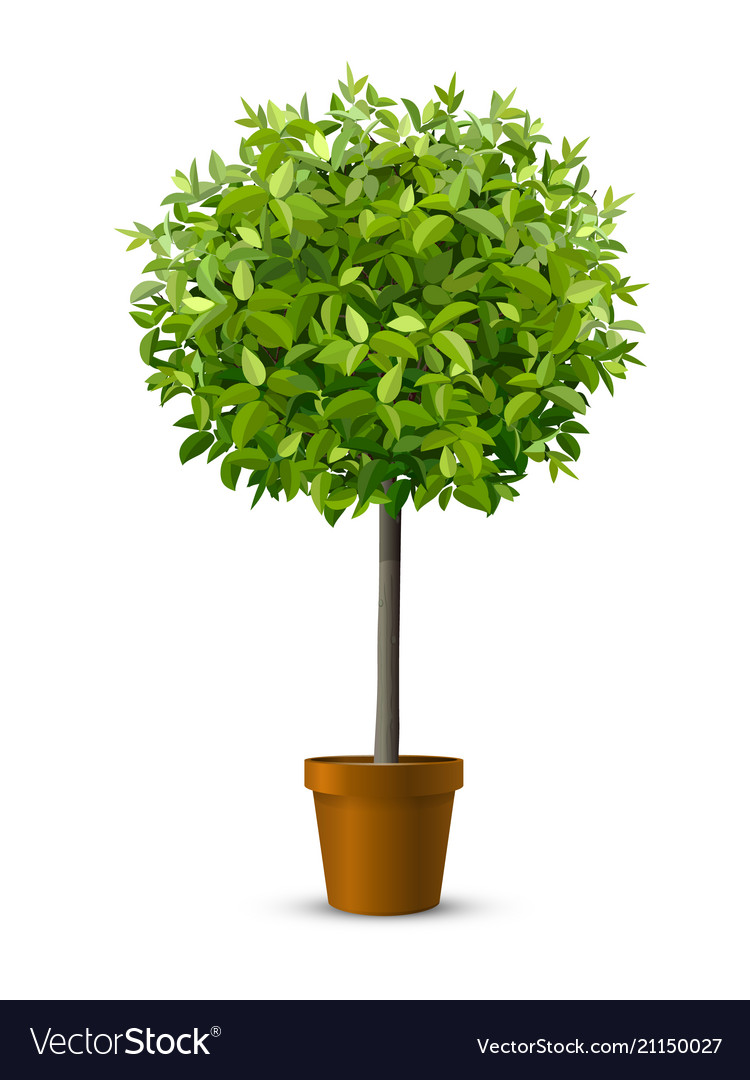 Tree in flowerpot vector
