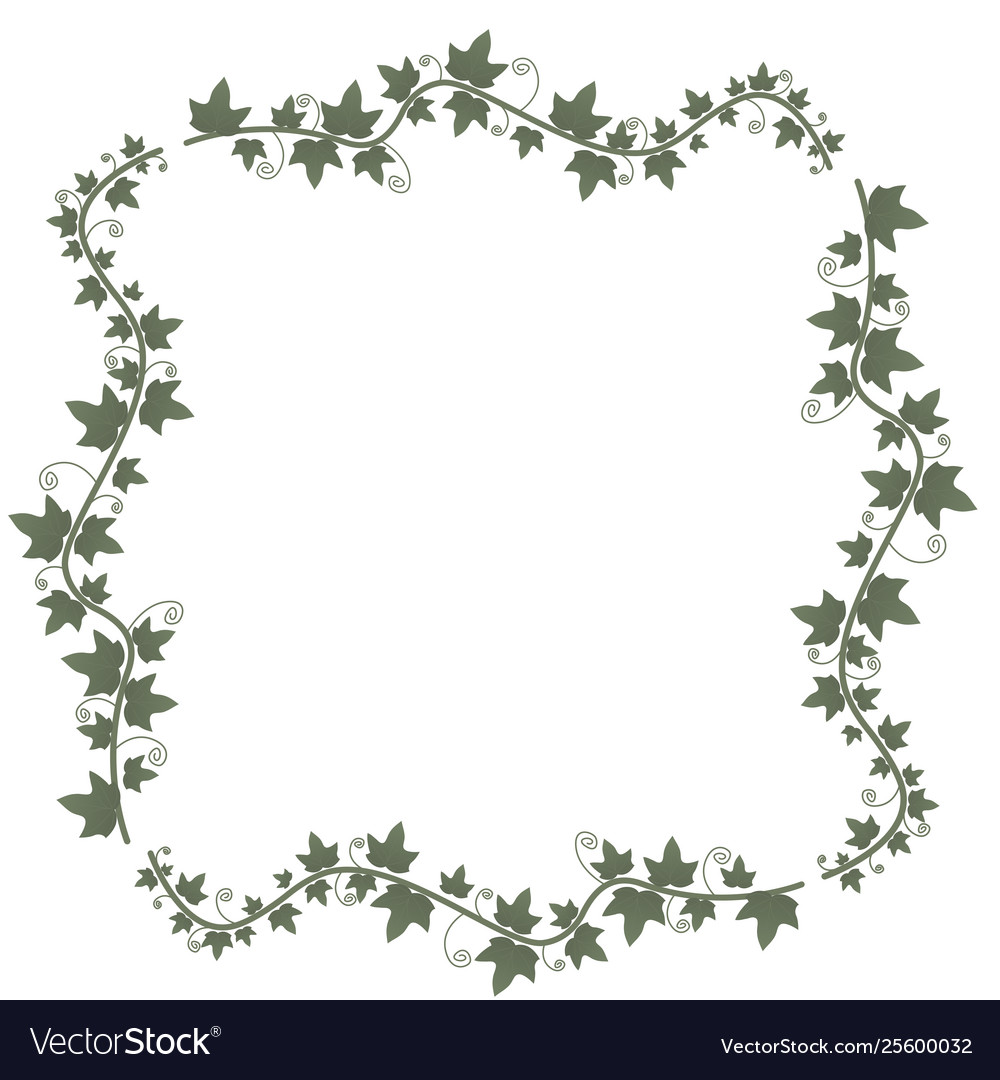 Ivy Vines With Green Leaves Floral Frame Green Vector Image