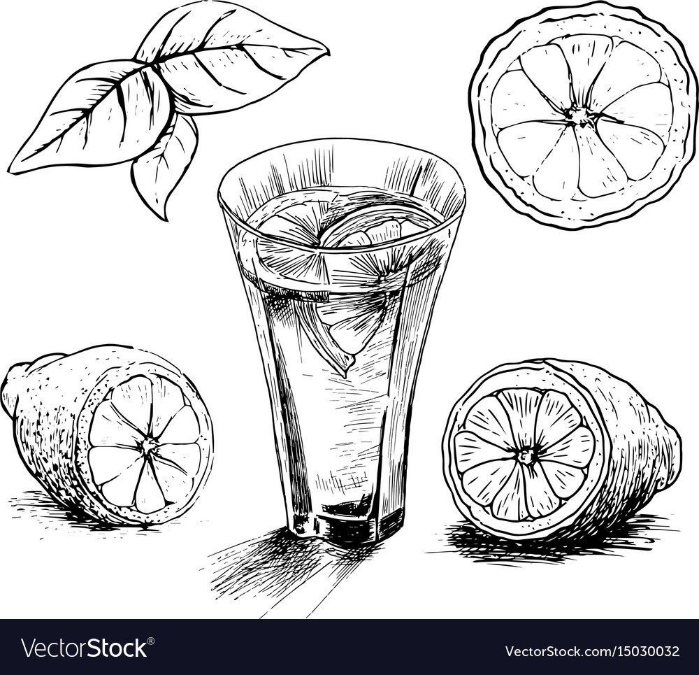 Lemon vintage hand draw vector image