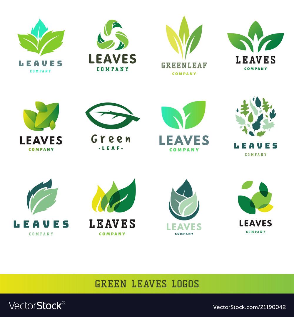 Green leaf eco design friendly nature elegance