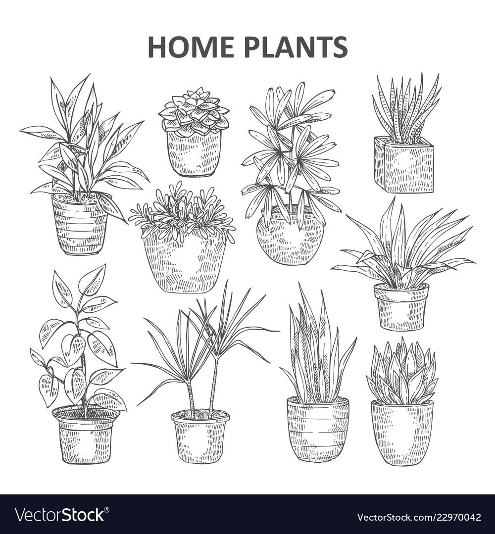 Home plant 03