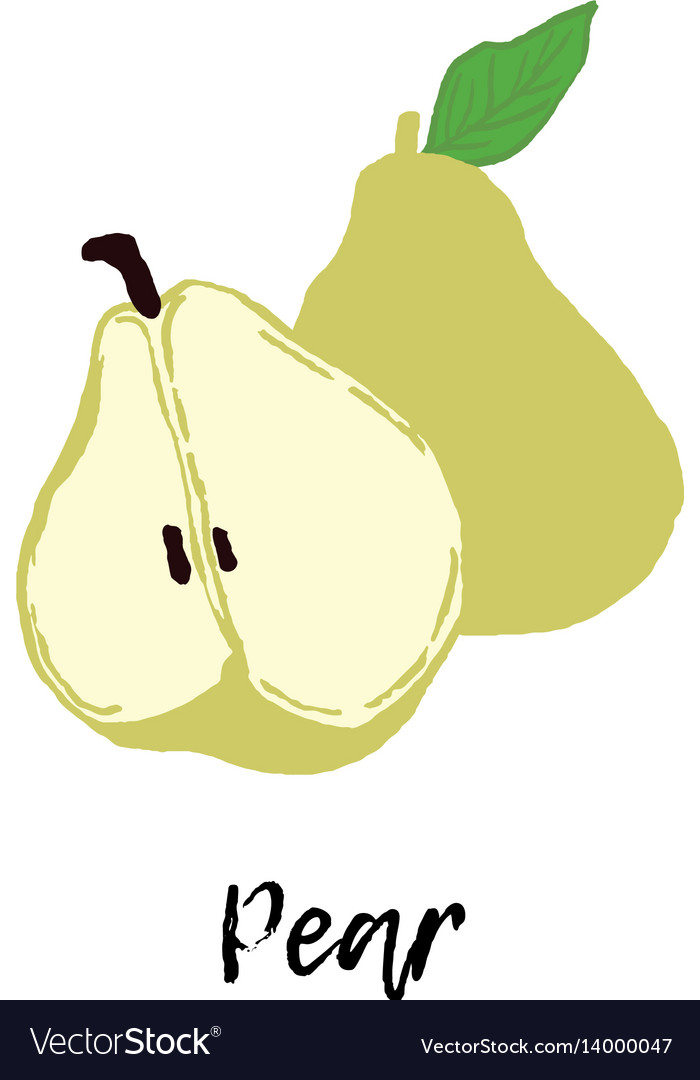 Pear fruit drawing food vector image