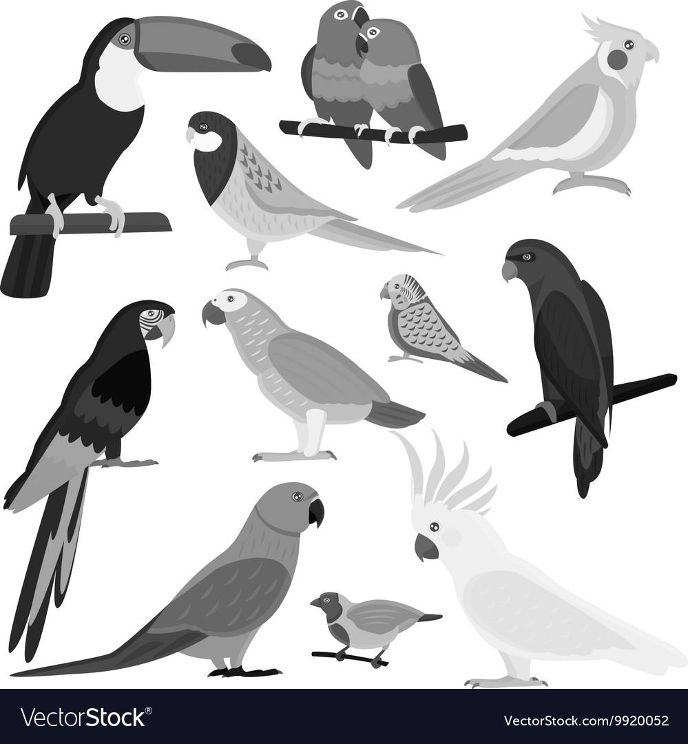 Cartoon parrots set