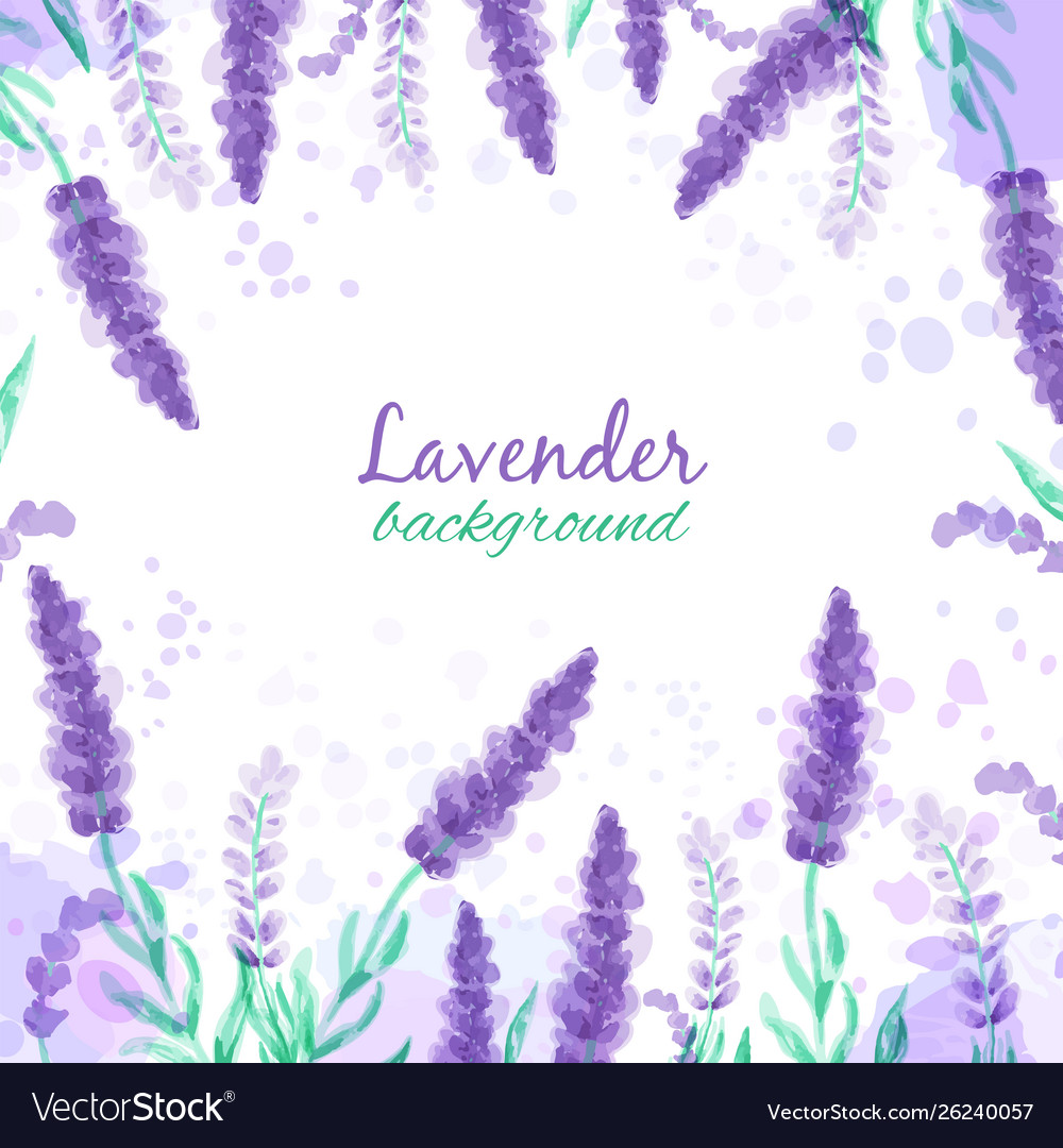 Lavender Background With Flowers Watercolor Vector Image Find and download lavender backgrounds wallpapers, total 29 desktop background. vectorstock