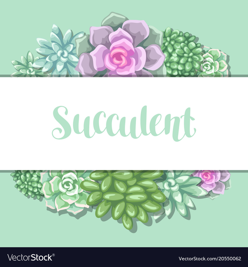 Card with succulents echeveria jade plant and