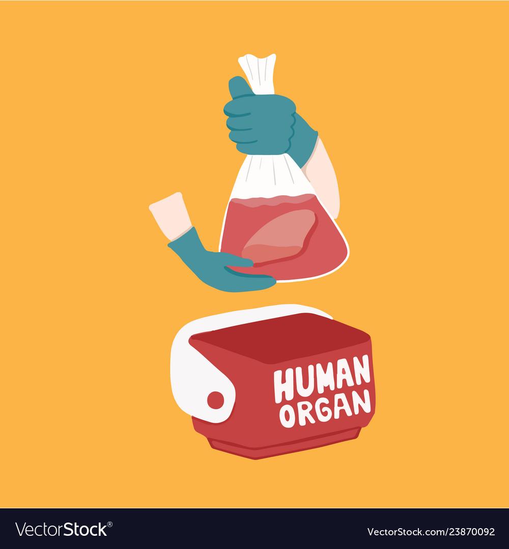 Cooler box for human organs transportation