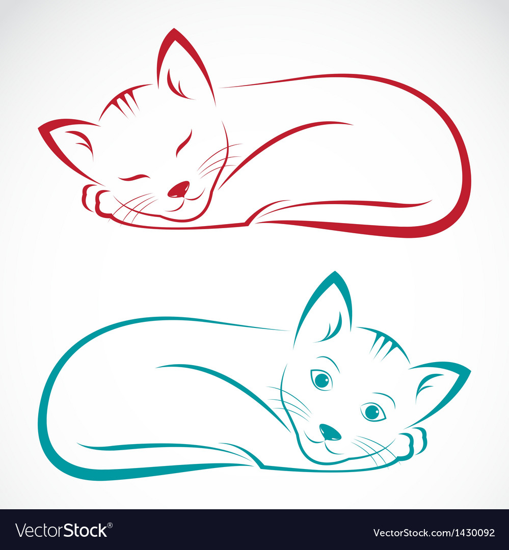 Image of an cat