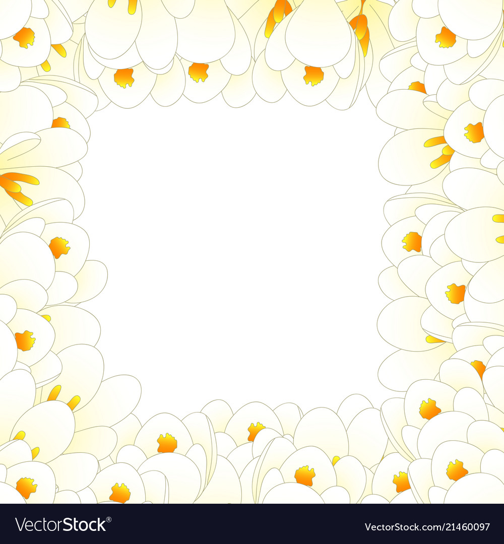 White crocus flower border royalty free vector image white crocus flower border vector image mightylinksfo