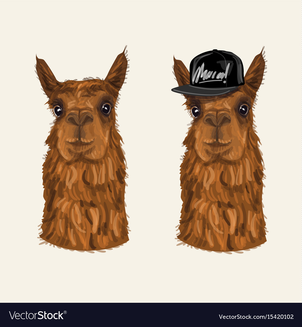 Alpaca hipster character
