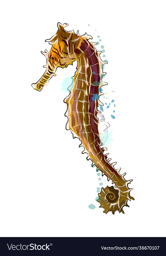 Sea horse from a splash watercolor colored