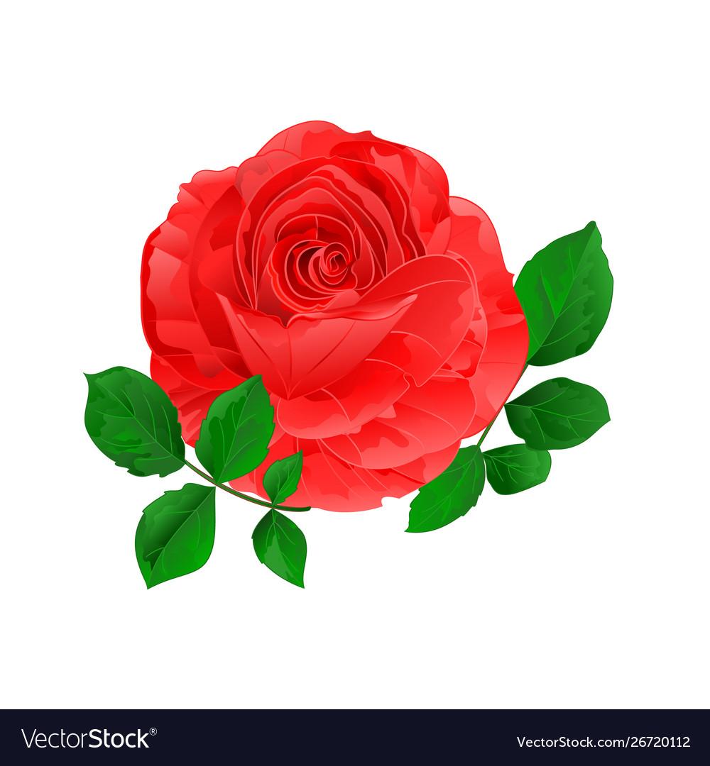 Rose pink simple stem with leaves vintage