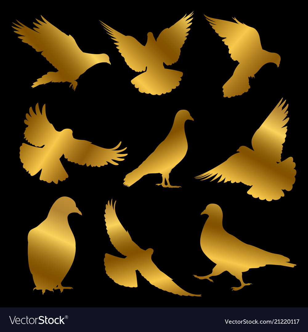 Golden dove silhouettes isolated on black