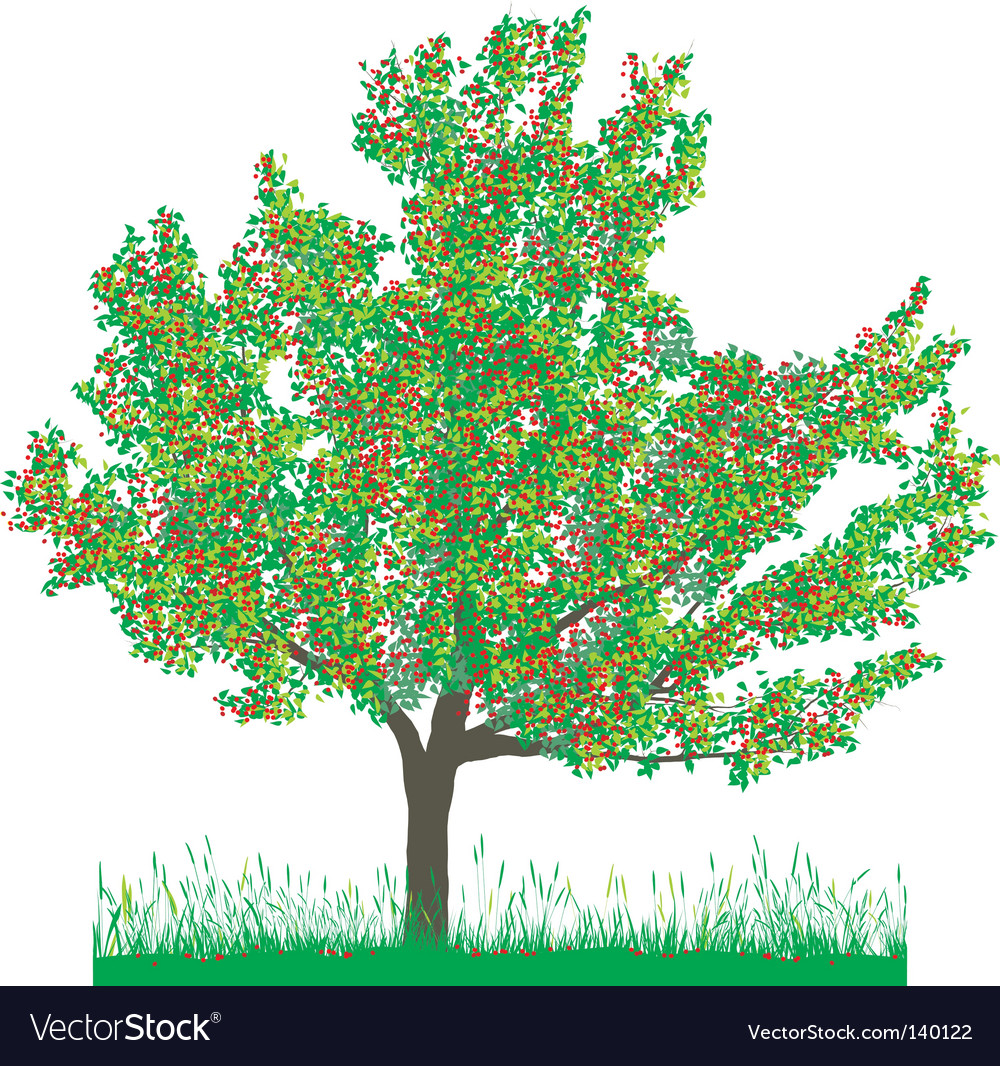 Cherry Tree In Summer Royalty Free Vector Image