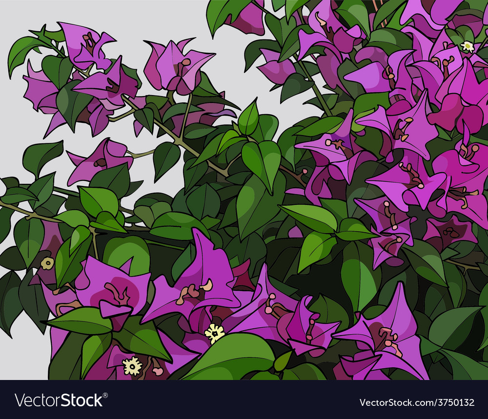 Beautiful Bush Of Pink Flowers Royalty Free Vector Image