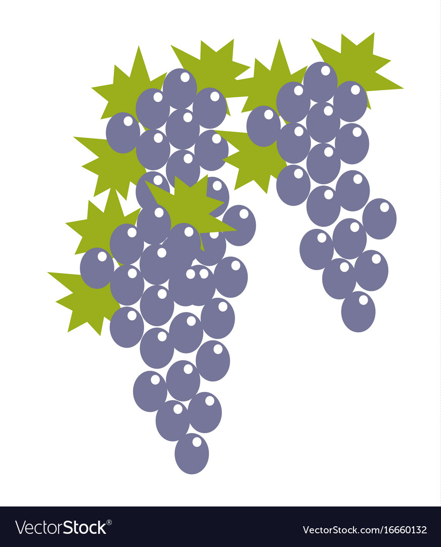 Blue grape bunches with leaves isolated cartoon vector image