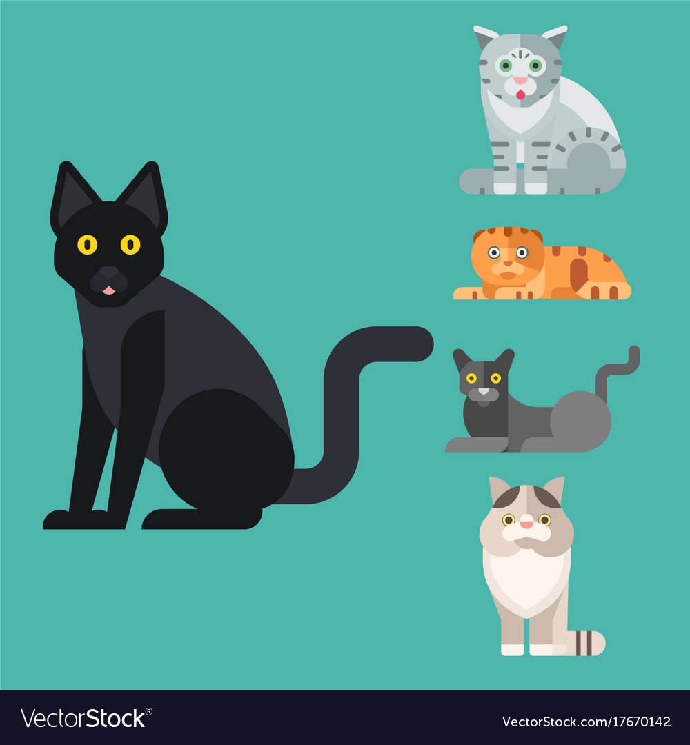 Cats cute animal funny