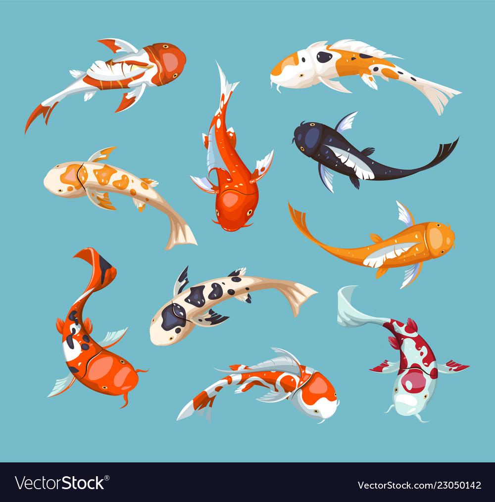 Koi carps koi japanese fish