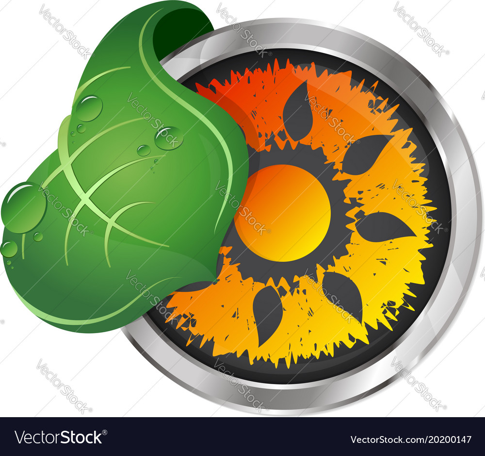 Sun and green leaf symbol vector image