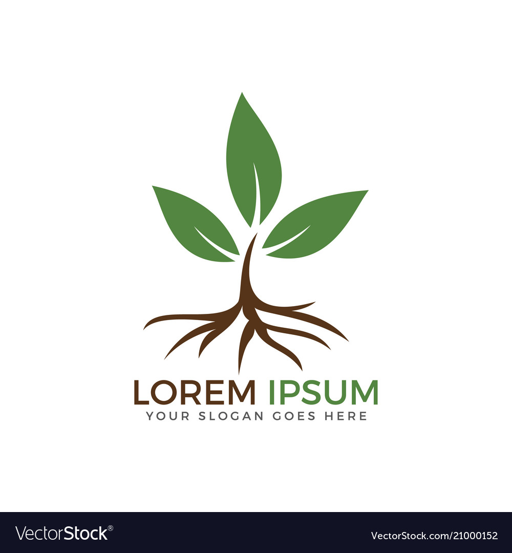 Tree root and leaves logo design