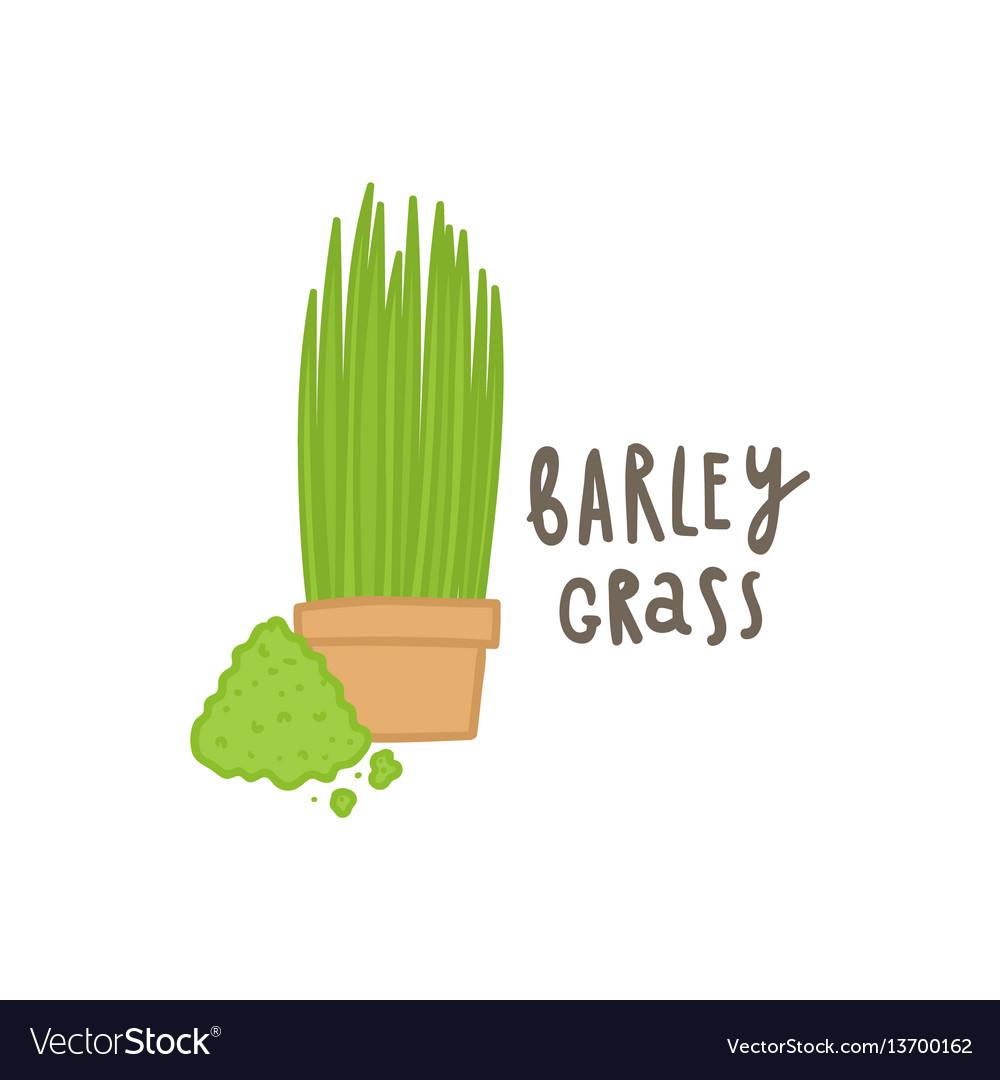 Barley grass superfood