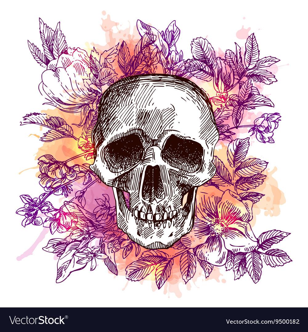 Sketch the skull