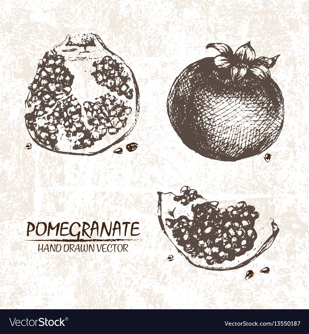 Digital detailed pomegranate hand drawn