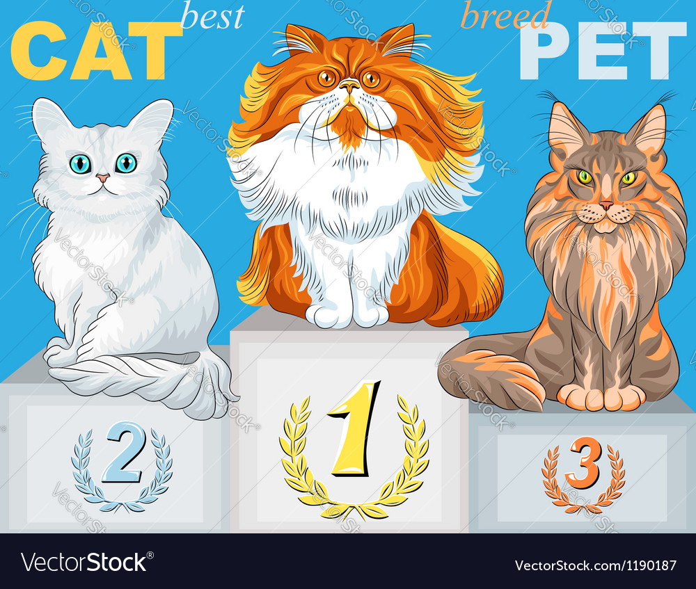 Fluffy cat champion of different breeds on the pod