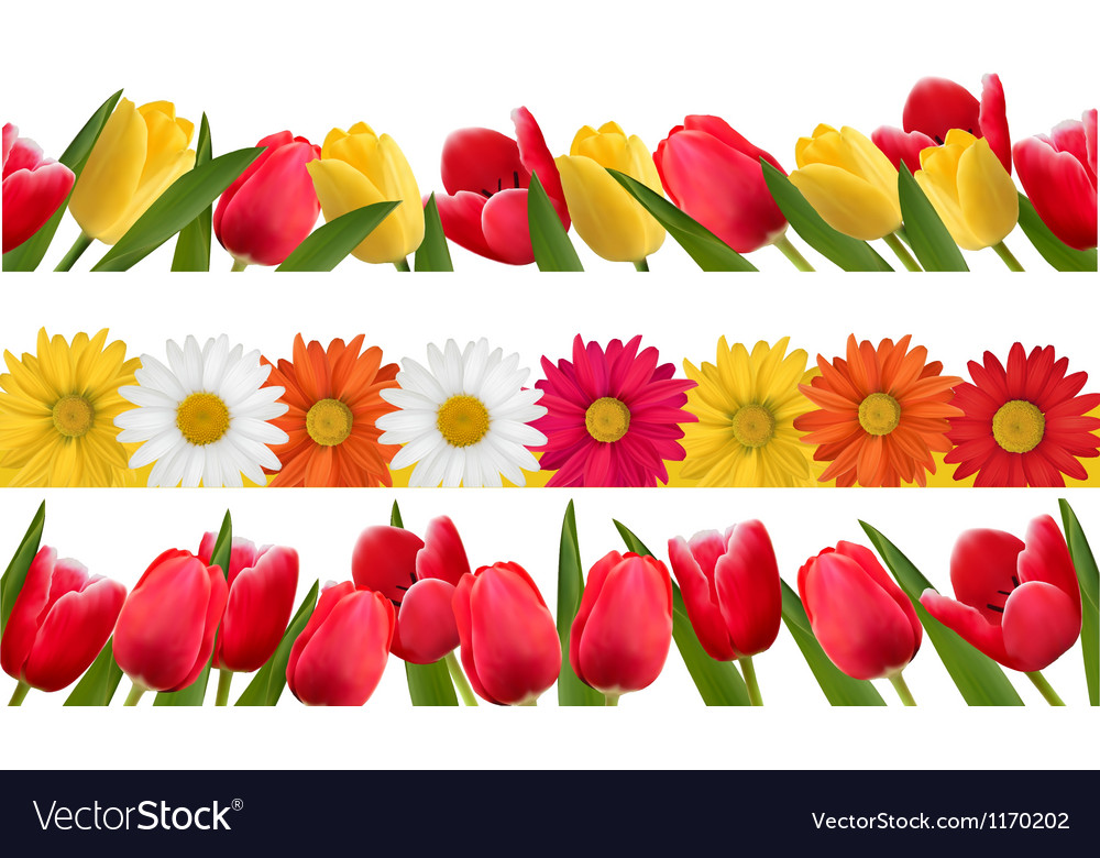 Spring Flower Borders Royalty Free Vector Image