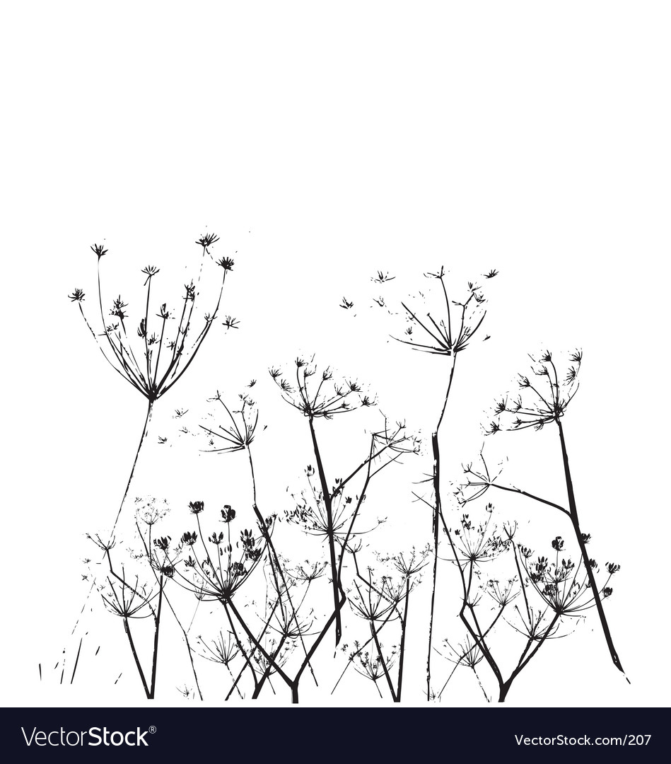 Fennel flower vector image
