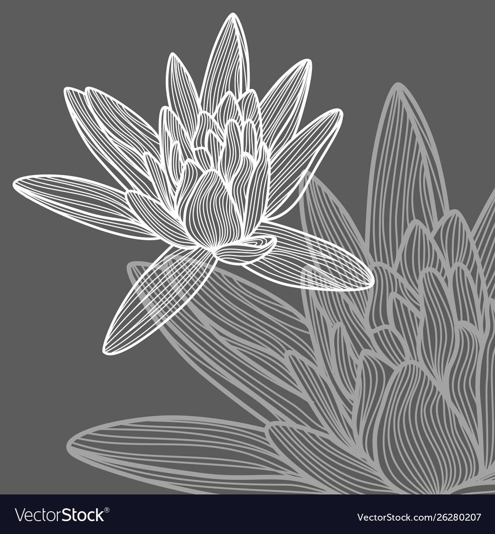 Hand drawn lotus flower