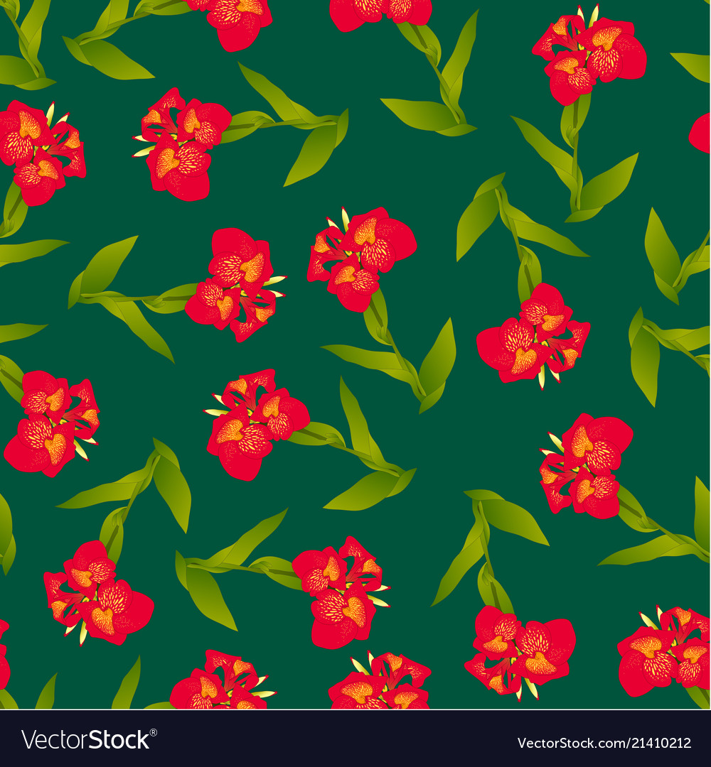 Red canna lily on green background