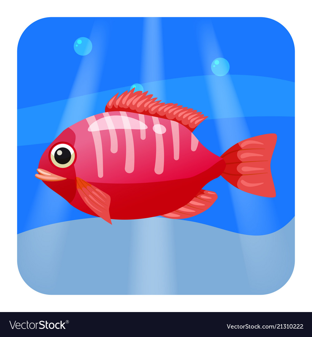 Cute beautiful red tropical fish on sea