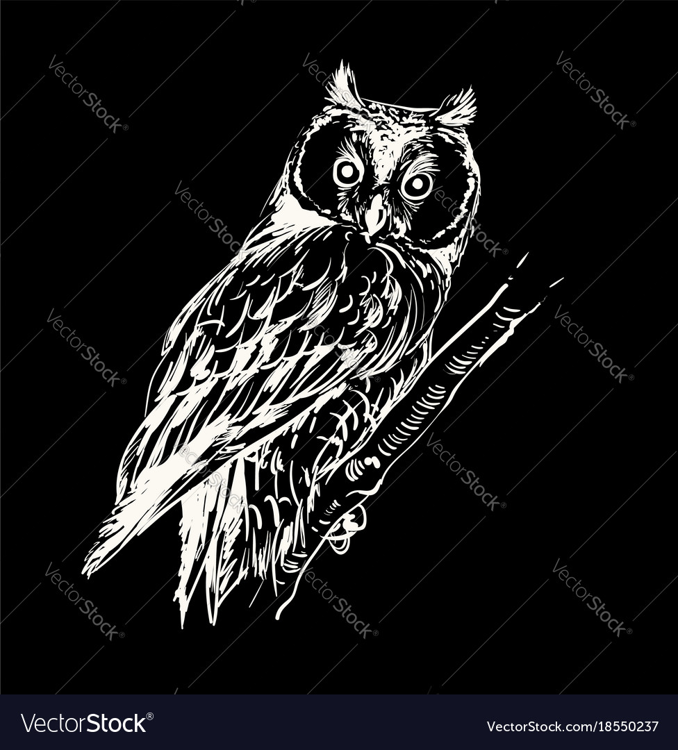 Owl hand drawn black and white