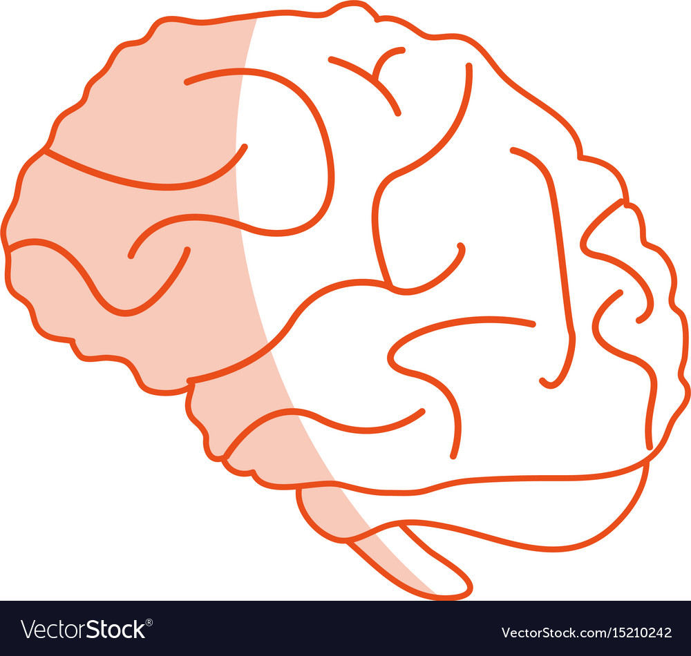 Brain cartoon silhouette shadow vector image