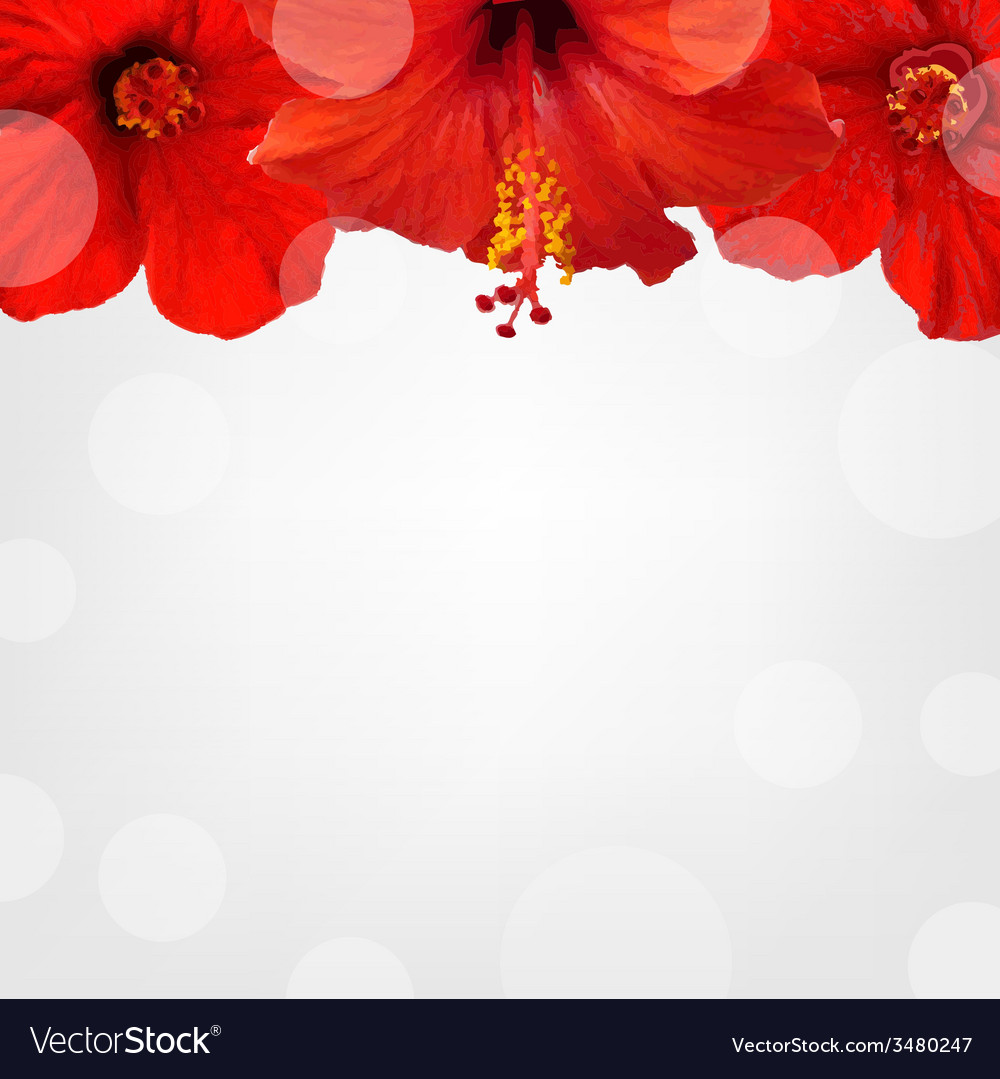 Hibiscus Stem With Buds Vector Images 54