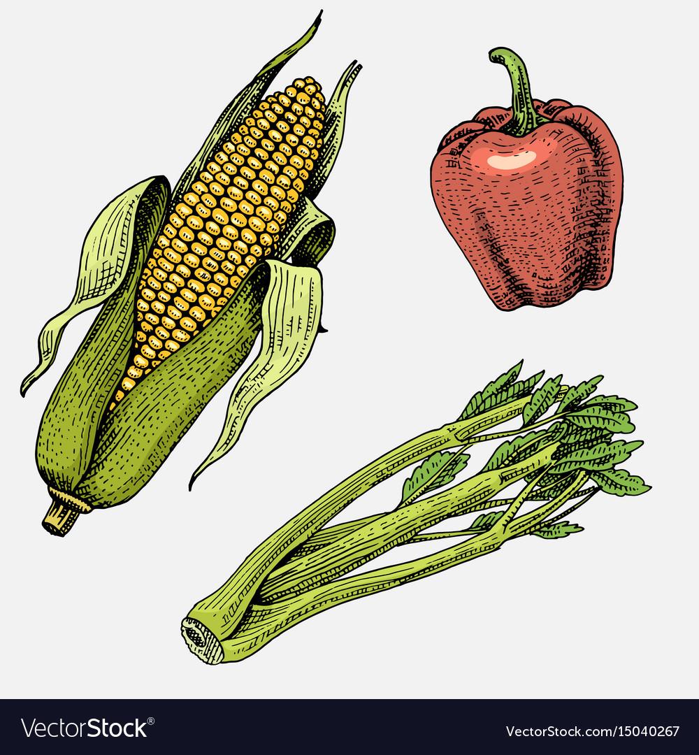 Set of hand drawn engraved vegetables vegetarian