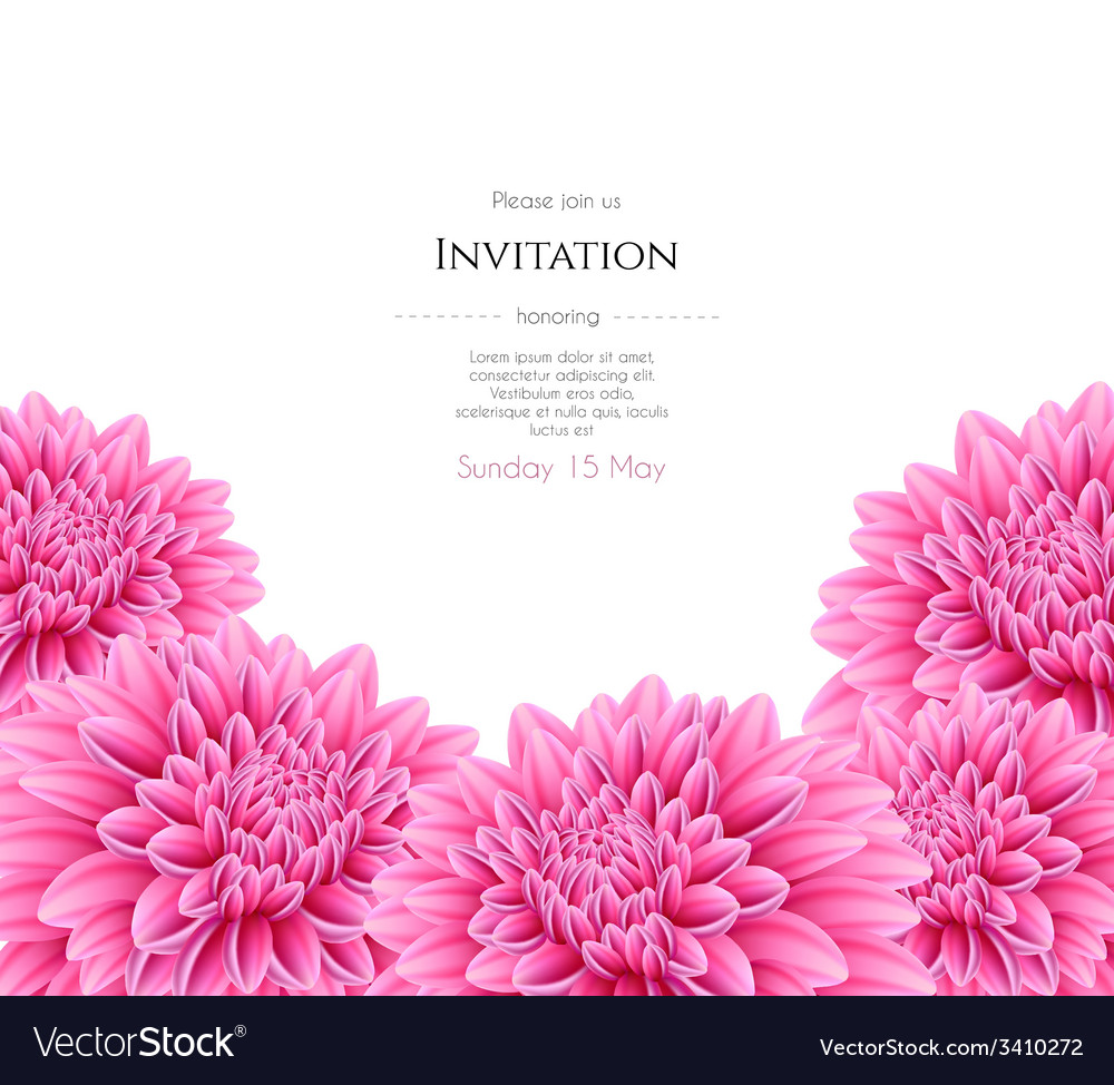 Blooming Beautiful Aster Flower Royalty Free Vector Image