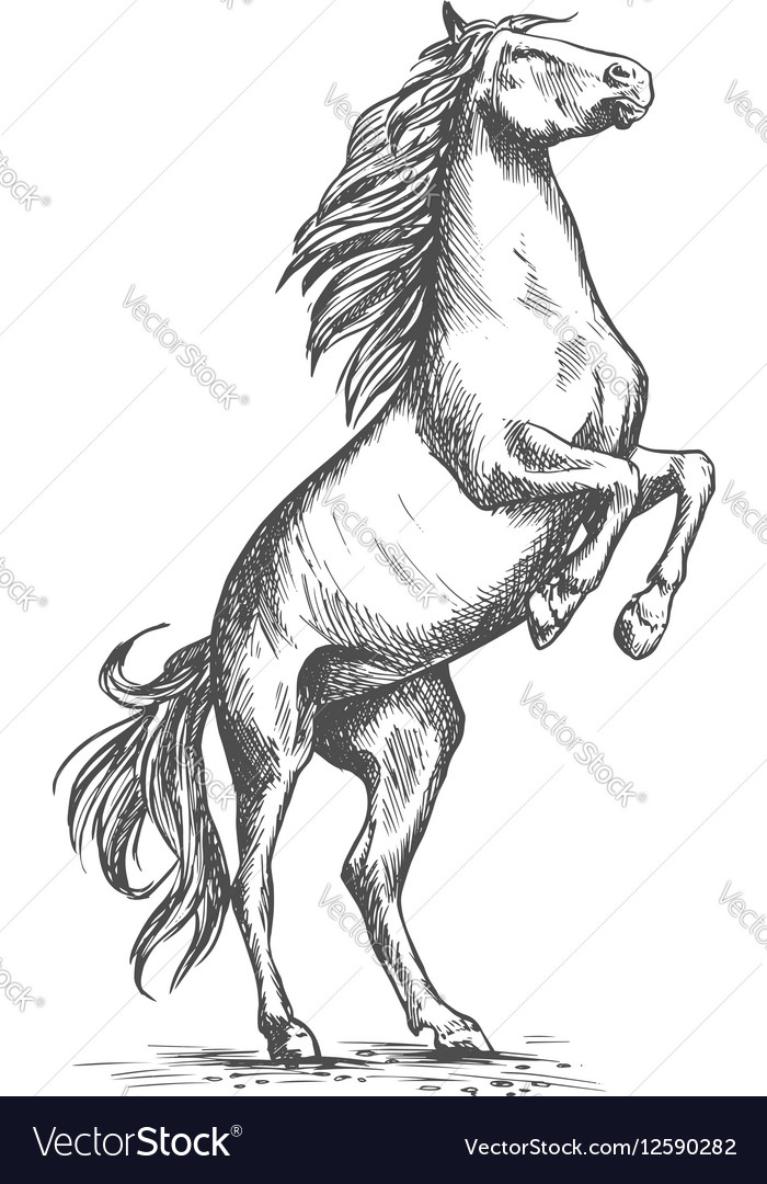 Rearing Horse Sketch Equine Horserace Sport Vector Image