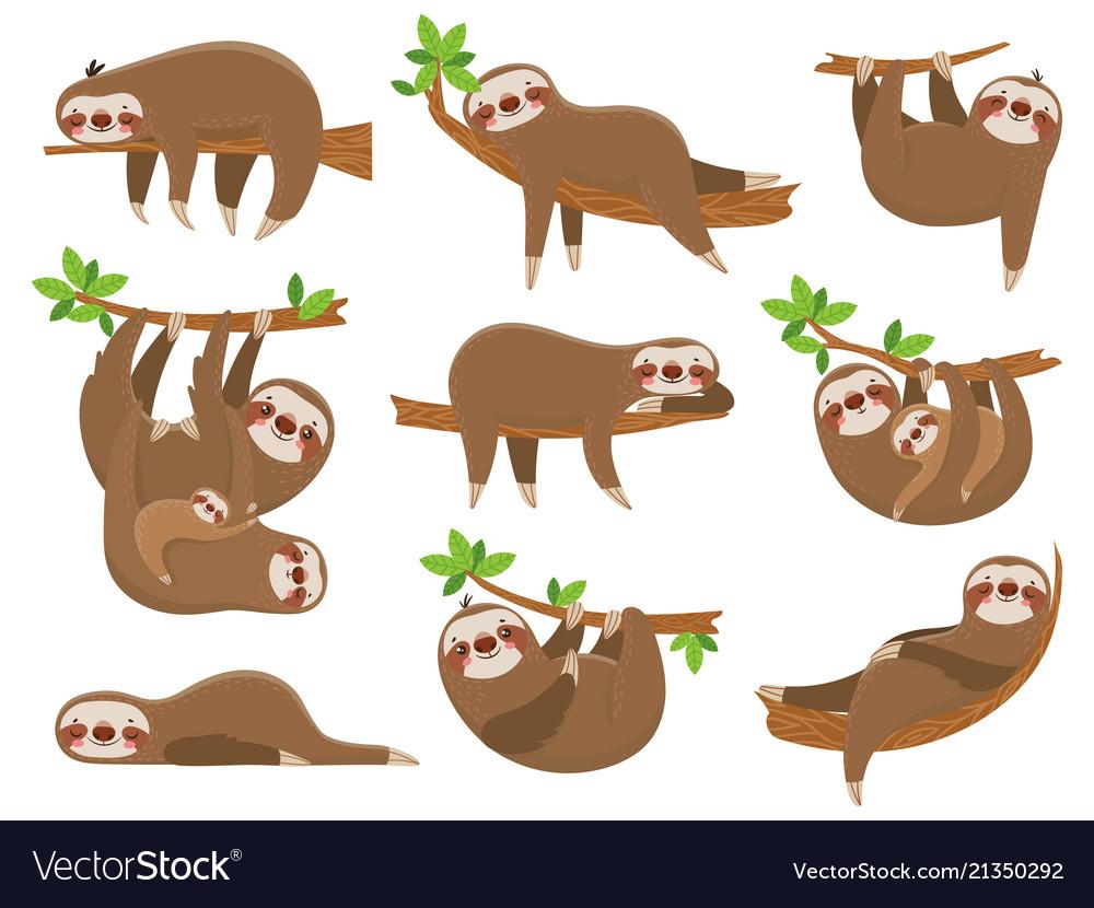 Cartoon sloths family adorable sloth animal at
