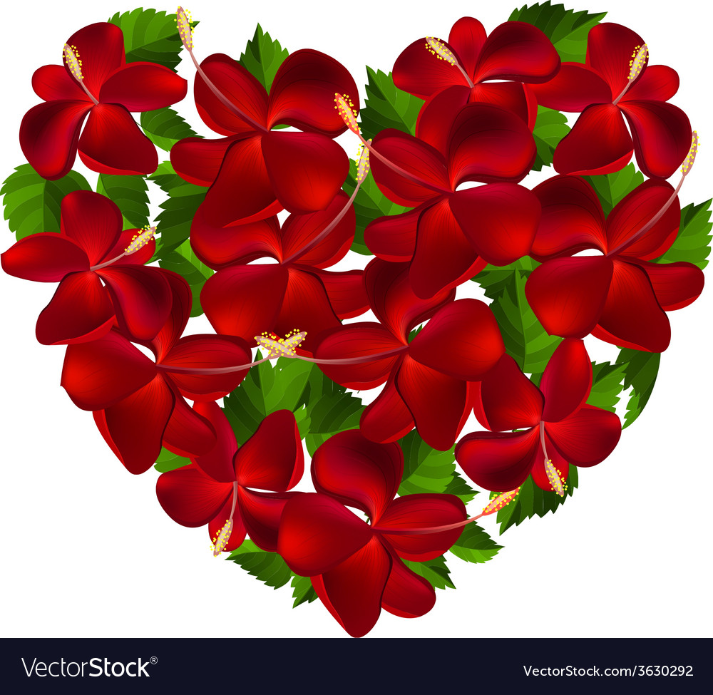 Heart Made Of Hibiscus Flowers Royalty Free Vector Image