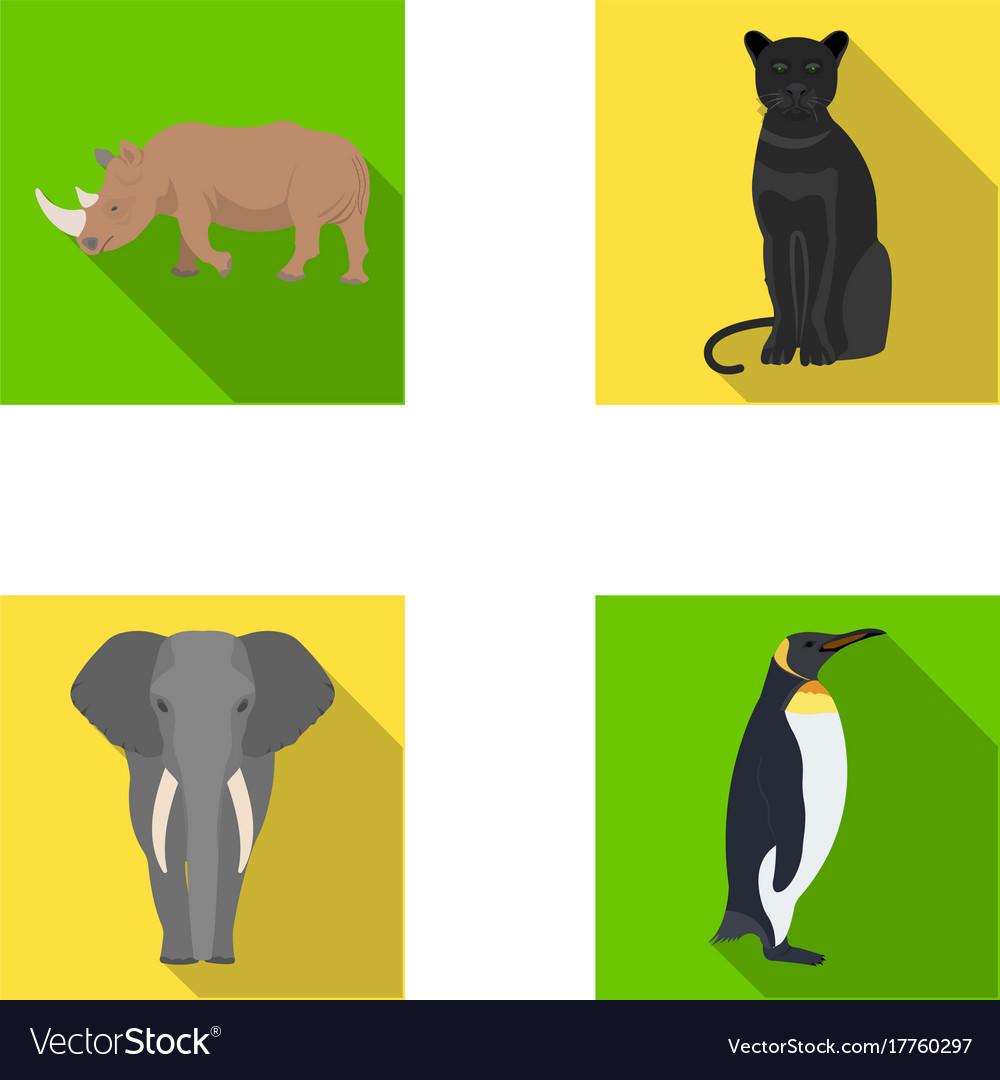 Black rhinoceros panther wild cat african animal