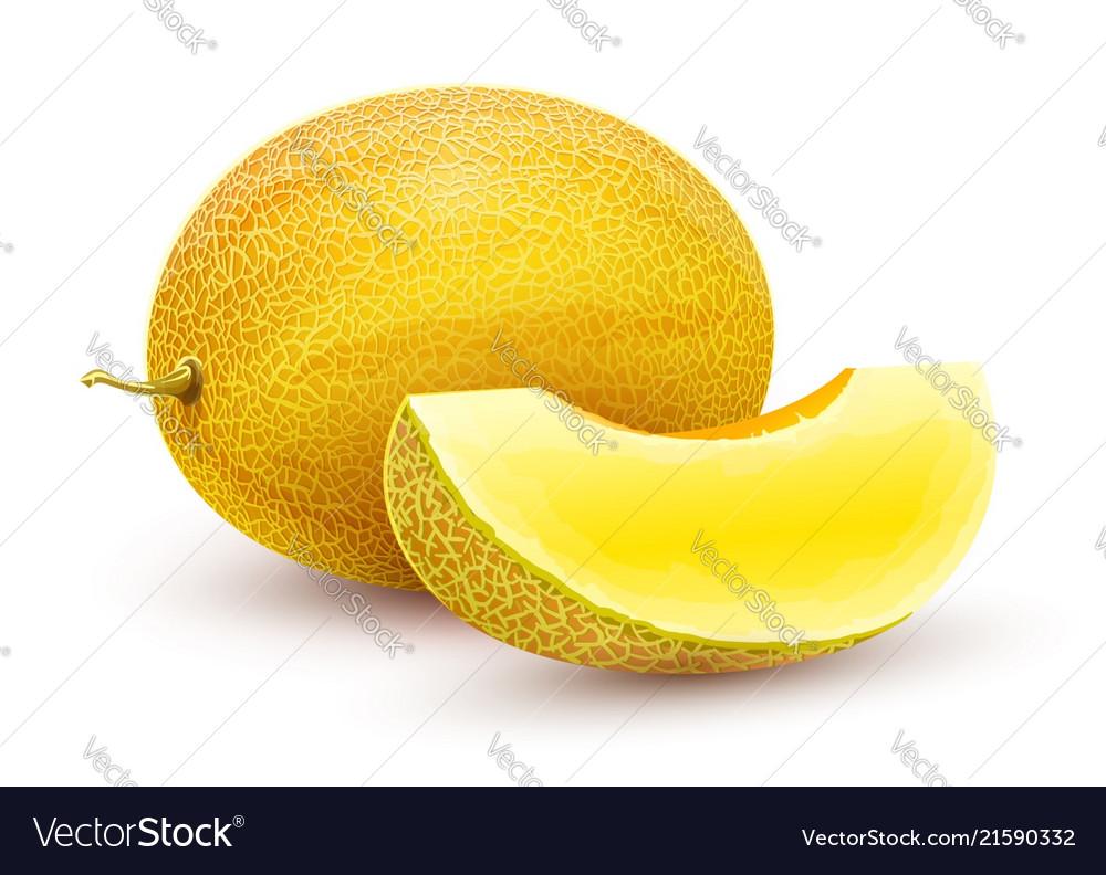 honeydew melon whole fresh royalty free vector image