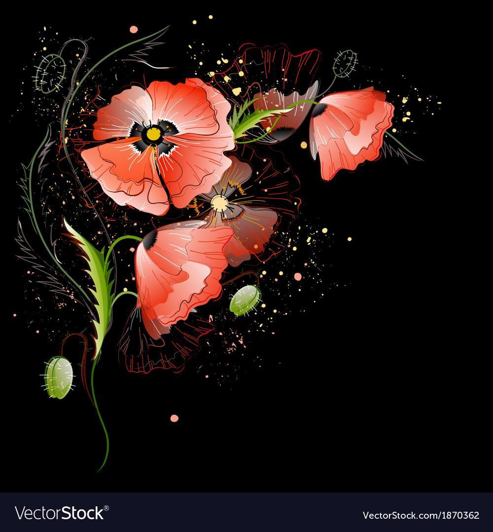 Black Background with Red Poppy Flowers