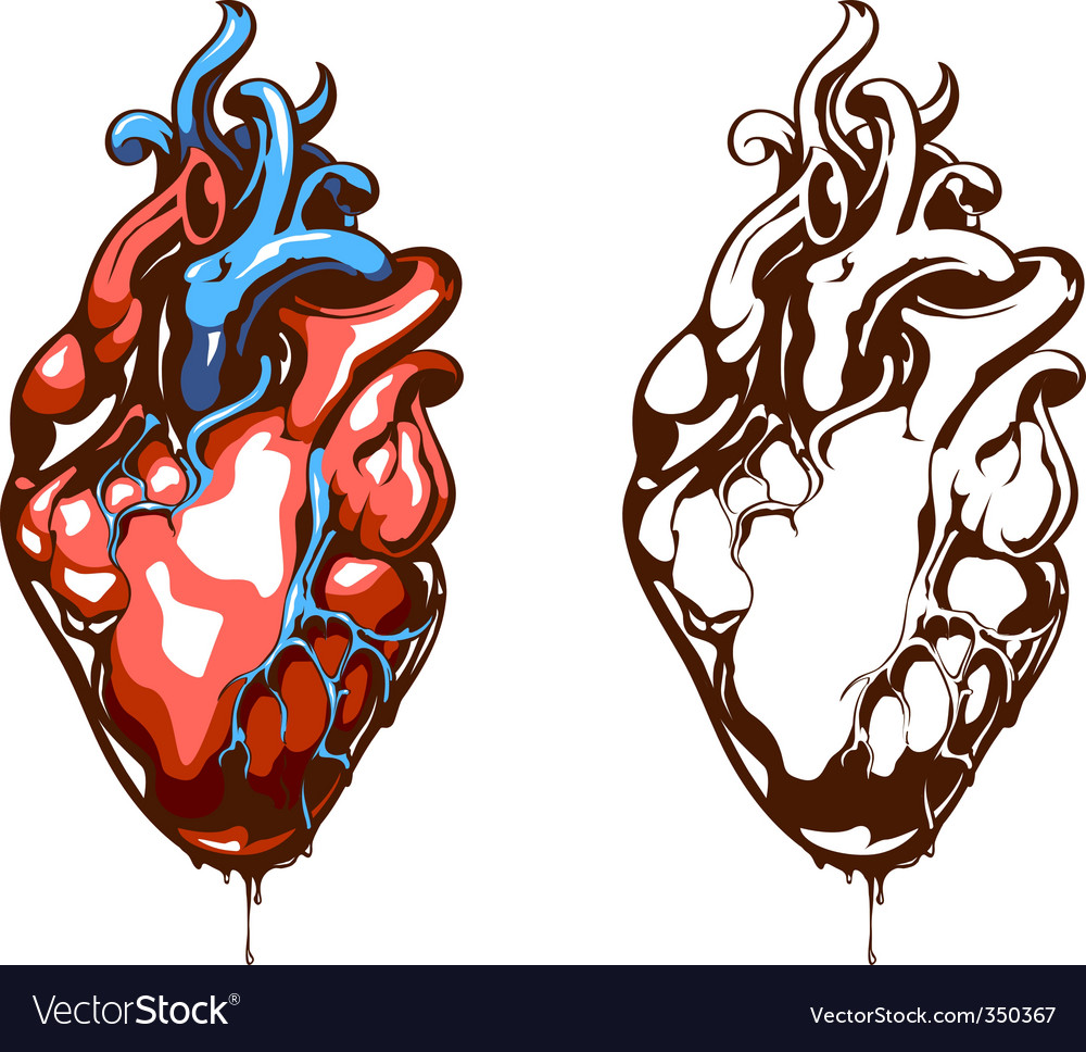 Anatomical Heart Royalty Free Vector Image Vectorstock