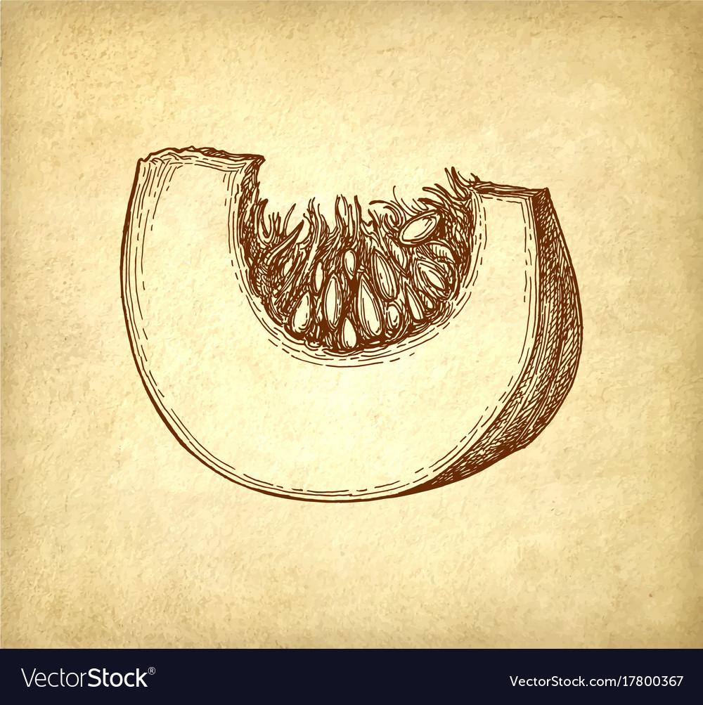 Ink sketch of pumpkin piece